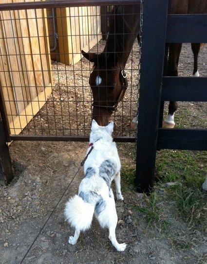 Dog & horse nuzzling