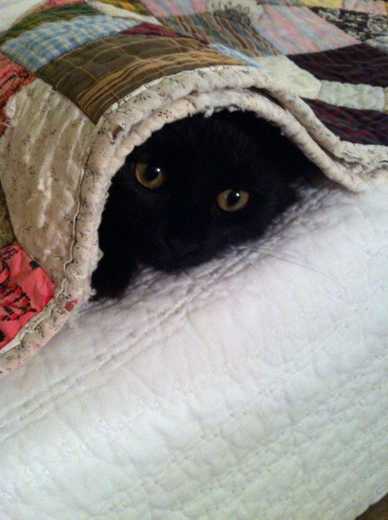 Nip-Nip hiding