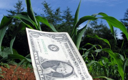 A dollar bill planted among other seedlings in a field