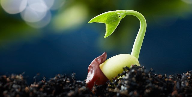 A sprouting seed in soil