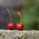 Two cherries on a rock shelf
